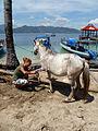 Horse-clinic-delphine.jpg