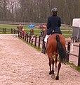 Horse riding back.jpg