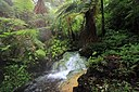 Hot springs Mount Gede Pangrango National Park.jpg