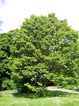 Дерево из фотографии