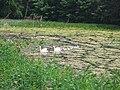 Howick Pond - geograph.org.uk - 107392.jpg