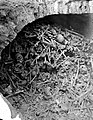 Human bones and skulls in a brick-built pit. Photograph. Wellcome L0001903.jpg