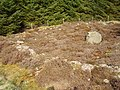 Hut circle - geograph.org.uk - 167224.jpg