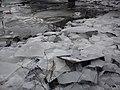 IJS bij Rivierdijk - panoramio.jpg