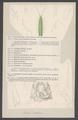 Idotea hectica - - Print - Iconographia Zoologica - Special Collections University of Amsterdam - UBAINV0274 006 03 0028.tif