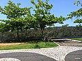 Iguape - SP - panoramio (188).jpg