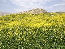 Ilam Province of Persia 2014.JPG
