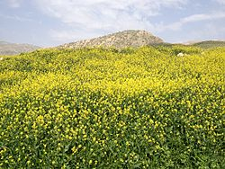 Ilam Province of Persia 2014.JPG