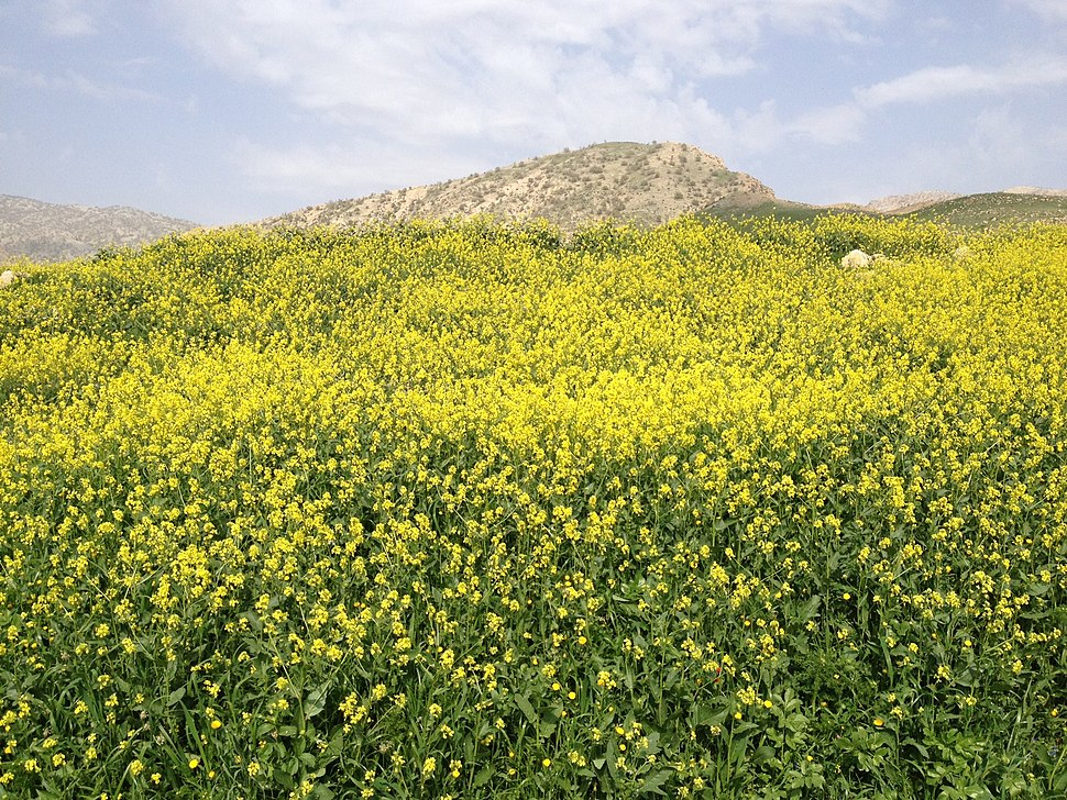 Ilam Province of Persia 2014
