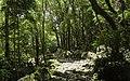 Ilha das Flores P5270203 (35170626674).jpg