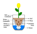 Illustration-Sub-Irrigated Planter from pop bottle.png