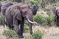 Impressions of Serengeti (133).jpg