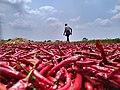Indian chillies.jpg