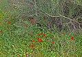 Iris-Hill-Anemones-001.jpg