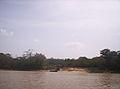Isla de Anacoco caño Brazo Negro del río Cuyuní.jpg