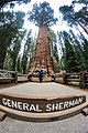 It's the General Sherman Tree, folks! Sequoia National Park, CALIFORNIA (27432120342).jpg