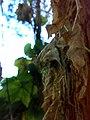 JNU Dry Leaves.jpg