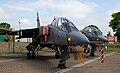 Jaguars 1 (9011918840).jpg