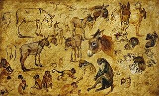 Studies of animals (donkeys, cats and monkeys)