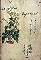 Japanese Herbal, 17th century Wellcome L0030057.jpg