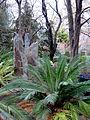 Jardín Botánico de Madrid en febrero- (16486450200).jpg
