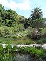 Jardín canario 82.JPG