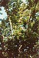 Jardin de Pamplemousses (3001712870).jpg