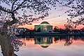 Jefferson Memorial Sunrise With The Cherry Blossoms 2016 03 24 (146164469).jpeg