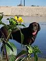 Jers on santa ana river - panoramio - nick thornton (2).jpg