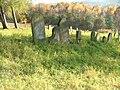 Jewish cemetery in Bobowa11.jpg
