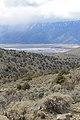 Jumbo Grade Trail - panoramio (32).jpg