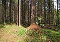 Jyväskylä - ant hill2.jpg
