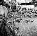 Kaketoe in Ganzee, Bestanddeelnr 252-5871.jpg