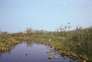 Lake Chad flooded savanna Flooded grassland ecoregion in Africa