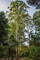 Karura Forest Nairobi 08.JPG