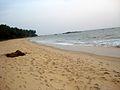 Kizhunna beach 17.JPG