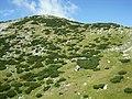 Kneps (Peca) - panoramio.jpg
