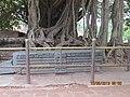Konark - Odisha - DSC3.jpg