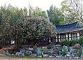 Korea's Natural Monument 515 (4289223183).jpg