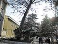 Korenovsk, Krasnodar Krai, Russia - panoramio (3).jpg