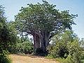 Kremetart-Baobab - panoramio.jpg