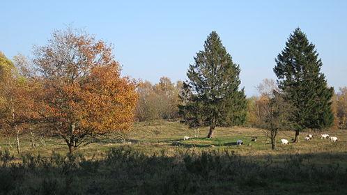 Kremperheide Binnendünen-Nordoe Nov-2014 IMG 4120.JPG