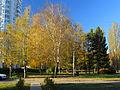 Kyiv Yunist Park15.JPG