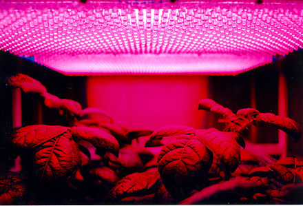 LED panel light source used in an experiment on potato plant growth by NASA LED panel and plants.jpg