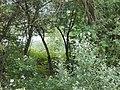 LES ILES NATURAL RESERVE IFF-633 IZ5GST-IX1 IU5AXT-IX1 - panoramio.jpg