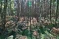 LSG Forst Rundshorn nahe Würmseeweg IMG 9890.jpg