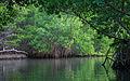 Laguna de La Restinga National Park 2.jpg