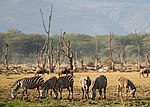 Lake Manyara Wildlife.jpg