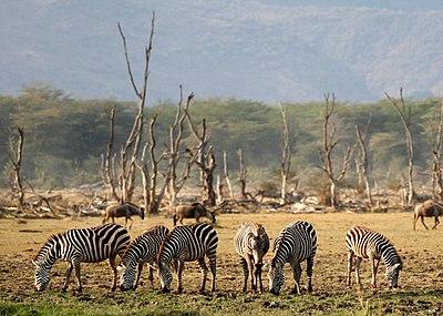 Lake Manyara Wildlife.jpg