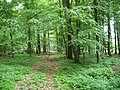 Landschaftsschutzgebiet Pferdebruch Eickholt Melle Datei 4.jpg